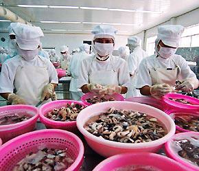 Đến nay đã có 245 cơ sở thủy sản Việt Nam được xuất khẩu sang EU - Ảnh: Việt Tuấn