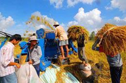 Giá lúa tăng chủ yếu do nhu cầu từ thị trường thế giới.