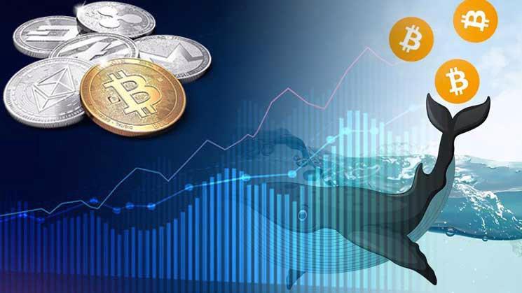 """Các nhà đầu tư """"cá mập"""" được cho là đã thao túng giá Bitcoin thời gian qua - Ảnh: CoinDesk"""