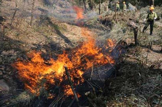 Tính đến trưa 5/3, đang có khoảng 136 điểm cháy rừng ở 7 tỉnh - Ảnh Chinhphu.vn.