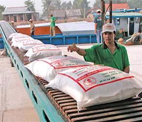 Gạo xuất khẩu giảm không chỉ về số lượng mà cả giá cả - Ảnh: TT.