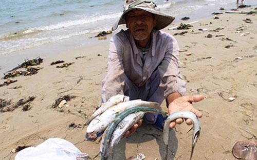 Ngư dân các tỉnh ven biển miền Trung hiện đang đối mặt với nhiều khó khăn do cá không tiêu thụ được.<br>