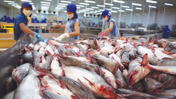 Hoa Kỳ sắp thanh tra chương trình kiểm soát cá da trơn Việt Nam.