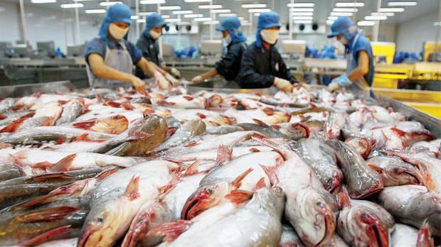 Các doanh nghiệp xuất khẩu cá tra-basa của Việt Nam sẽ bị áp dụng mức thuế chống bán phá giá từ 2,39 USD/kg - 7,74 USD/kg.