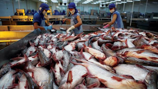 Cá tra Việt Nam xuất khẩu vào Mỹ đã sụt giảm sau lần áp thuế POR12.