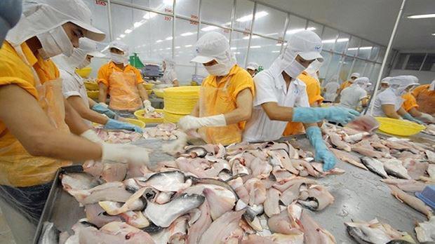 Cá tra - basa Việt bị áp thuế cao chưa từng có tại thị trường Mỹ.