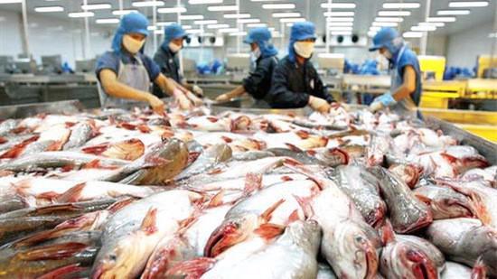 Ba quý đầu năm nay, xuất khẩu cá tra sang thị trường Trung Quốc - Hồng Kông vẫn đạt mức tăng trưởng dương tuy tốc độ có chậm hơn so với năm trước.