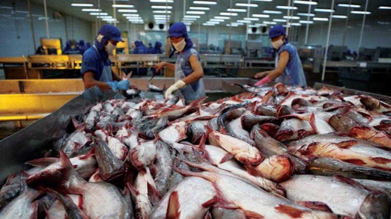 Giá trị xuất khẩu cá tra 9 tháng năm 2018 đạt 1,68 tỷ USD, tăng 29,2% so với cùng kỳ năm 2017.