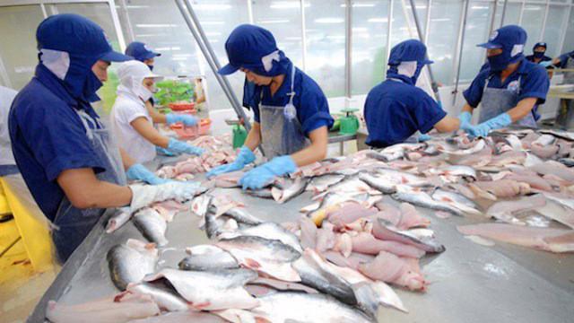 Diện tích nuôi cá tra ở Đồng bằng sông Cửu Long đang tăng mạnh.