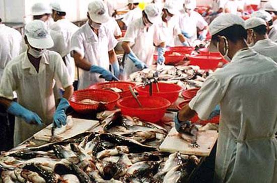 Nhu cầu tiêu dùng thủy sản tăng mạnh trên thế giới đã giúp giá cá tra và tôm trong nước tăng mạnh mẽ.