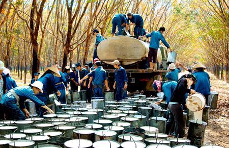 Mặt hàng cao su xuất khẩu trong tháng 7/2012 đạt 65.000 tấn với giá trị 195 triệu USD đưa lượng cao su xuất khẩu 7 tháng lên 468.000 tấn thu về 1,4 triệu USD, tăng 26,7% về lượng nhưng giảm 12,5% về giá trị.