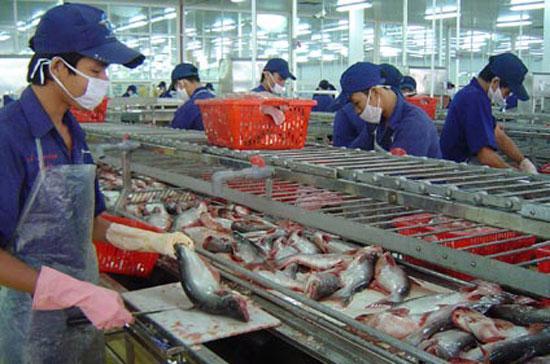 Chế biến cá xuất khẩu tại Nhà máy Ấn Độ Dương, Công ty Nam Việt, Thốt Nốt, Cần Thơ - Ảnh: Đức Vịnh