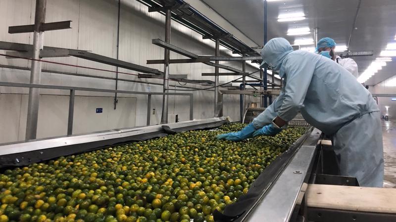 Sản xuất tại một doanh nghiệp chế biến nông sản tại Cần Thơ