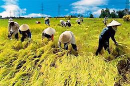 Ngân hàng Nhà nước sắp trình Chính phủ ban hành nghị định về chính sách tín dụng ngân hàng phục vụ phát triển nông nghiệp, nông thôn, trong đó có các chính sách tạo điều kiện cho hộ sản xuất, chủ trang trại và hợp tác xã vay vốn.