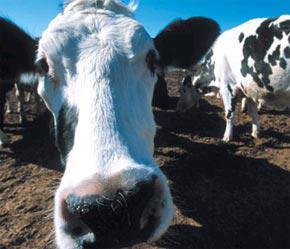 Mỹ chỉ giảm trợ cấp nông nghiệp từ 21 tỷ USD xuống còn 17 tỷ USD.