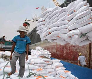 Trong năm 2008, Việt Nam đã ký hợp đồng xuất khẩu 5,1 triệu tấn gạo, đã giao 4,65 triệu tấn, đạt kim ngạch xuất khẩu 2,9 tỷ USD, gấp hơn hai lần so với năm 2007.