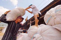Thị trường gạo thế giới đang tiếp tục chuyển động theo hướng nóng lên.
