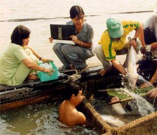 Theo dự báo của VASEP, từ nay cho đến tháng 3/2009, sản lượng cá tra nguyên liệu nuôi ở ĐBSCL sẽ giảm khoảng 40%.