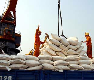 """Nếu so với giá gạo thời """"hoàng kim"""" tháng 3,4/2008 thì giá gạo thế giới hiện nay đã bị giảm tới 60% - Ảnh: Việt Tuấn."""