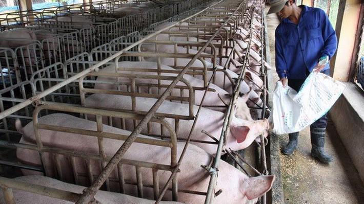 Chăn nuôi trở là ngành phải nhập siêu lớn nhất trong số các nhóm ngành hàng nông sản.