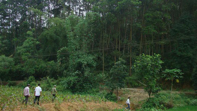 UBND huyện Bắc Quang đã cấp 2 giấy chứng nhận quyền sử dụng đất trái thẩm quyền với tổng diện tích 17,42 ha. (Ảnh minh họa)