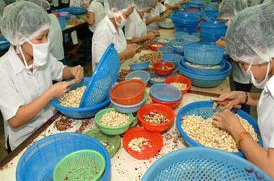 Việt Nam đang đứng đầu thế giới vể xuất khẩu điều.