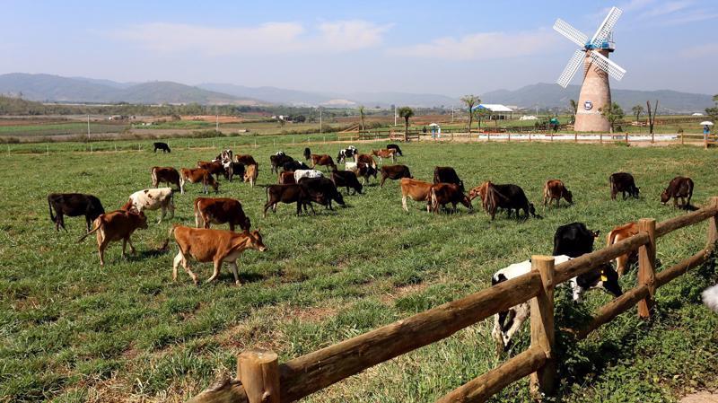 Trang trại Organic tại Lâm Đồng - Đà Lạt - trang trại Organic đầu tiên đạt tiêu chuẩn châu Âu tại Việt Nam.