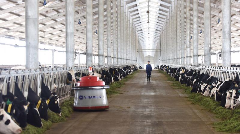 Tổ hợp trang trại công nghệ cao Thống Nhất tại Thanh Hóa - vừa khánh thành vào tháng 3/2018 sẽ là nơi chăm sóc và nuôi dưỡng những cô bò A2 thuần chủng.