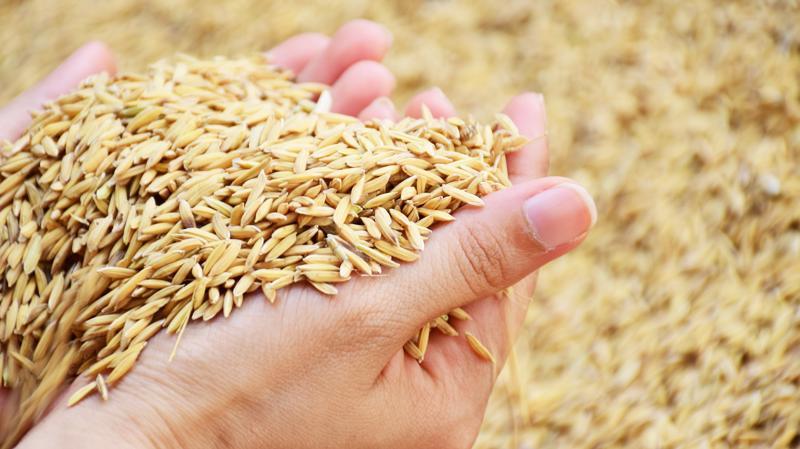 Xuất khẩu nông sản góp phần tích cực vào kỷ lục xuất siêu của Việt Nam trong năm 2020