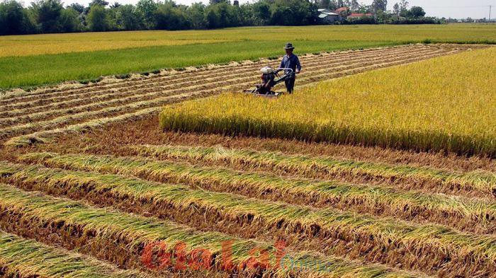 Thủ tướng Chính phủ đồng ý UBND tỉnh Hải Dương quyết định chuyển mục đích sử dụng 11,68 ha đất trồng lúa sang đất phi nông nghiệp.