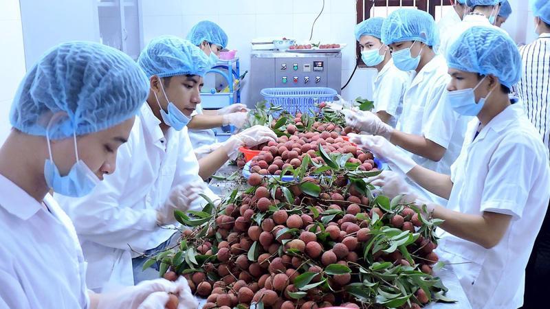 Xuất khẩu rau quả sang Trung Quốc chiếm 77% tổng kim ngạch xuất khẩu rau quả của Việt Nam.