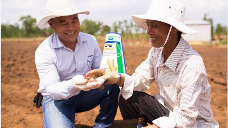 Kỹ sư Syngenta đồng hàng cùng nhà nông trên đồng ruộng.