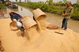 Không phải khi nào được mùa người trồng lúa cũng phấn khởi.