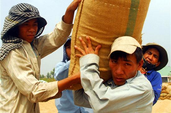 Chủ trương thu mua gạo tạm trữ đã giúp cho lúa hàng hóa của nông dân được tiêu thụ thuận lợi.
