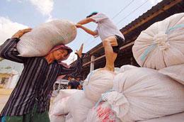 Đẩy mạnh tiến độ thu mua tạm trữ gạo là biện pháp cần thiết để giữ thị trường.