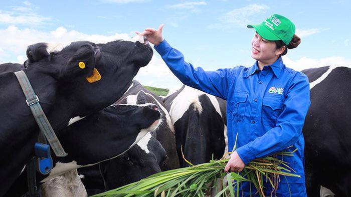 MCM hiện sở hữu đàn bò sữa hơn 2.000 con tại trang trại và 24.500 con thông qua việc liên kết chặt chẽ với hơn 500 hộ nông dân chăn nuôi bò sữa.