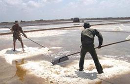Hiện giá muối ở khu vực miền Bắc và miền Trung khá thấp.