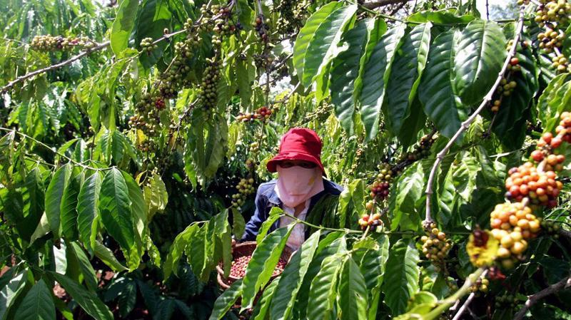 Xét về thị trường tiêu thụ nông sản năm 2018, Bộ Nông nghiệp đánh giá dù đã có nhiều chuyển biến nhưng nhìn chung vẫn là khâu yếu. Ảnh minh họa: Quang Phúc