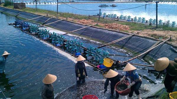 Bộ Nông nghiệp và Phát triển Nông thôn yêu cầu ngành thủy sản phải phấn đấu đạt tốc độ tăng giá trị sản xuất trên 4,69% trong năm 2019 và kim ngạch xuất khẩu thủy sản đạt trên 10,5 tỷ USD.