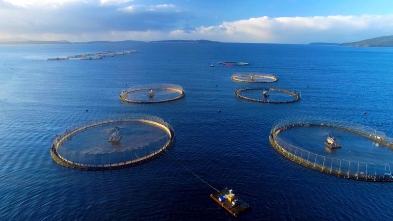 Ngành nuôi biển có tiềm năng rất lớn để phát triển kinh tế biển, trong đó có nuôi trồng, chế biến và thương mại các sinh vật biển - Nguồn: Internet.