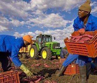 Các cơ quan phát triển cho rằng, sự minh bạch trong các vụ mua bán đất đai ở châu Phi là cần thiết, vì các thỏa thuận này tới nay vẫn thường được ký kết trong bí mật - Ảnh: AFP.