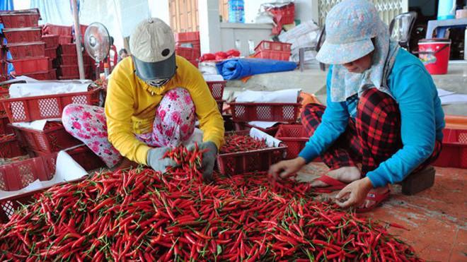 Malaysia quyết định tạm dừng nhâp khẩu ớt từ Việt Nam - Ảnh minh hoạ.