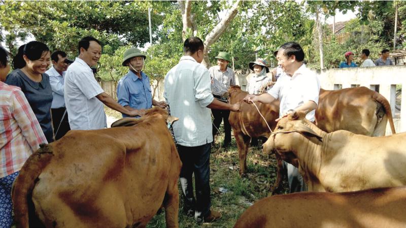 Mô hình trao bò giống sinh sản cho người nghèo mang lại hiệu quả cao