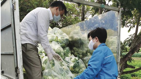 Nông dân Hải Dương đứng trước một vụ thất thu rau quả