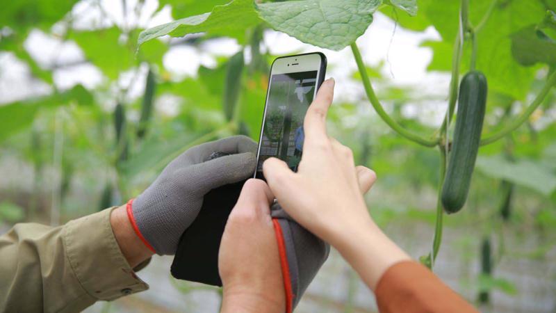 Ứng dụng công nghệ bán nông sản trực tiếp từ bà con nông dândân đến người tiêu dùng