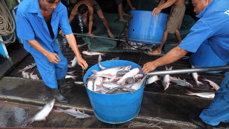 Thị trường hải sản đang găp nhiều bất lợi do ảnh hưởng của đại dịch covid-19