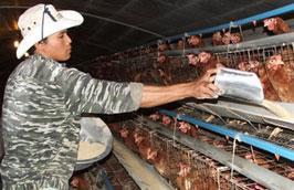 Dự báo nhu cầu về thức ăn chăn nuôi của cả nước trong năm 2010 có thể lên tới 17 triệu tấn.