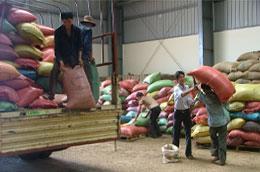 VICOFA đề nghị có chính sách ưu đãi vốn vay để doanh nghiệp có thể mua và ký gửi khoảng 200.000 tấn cà phê nhân mỗi năm.