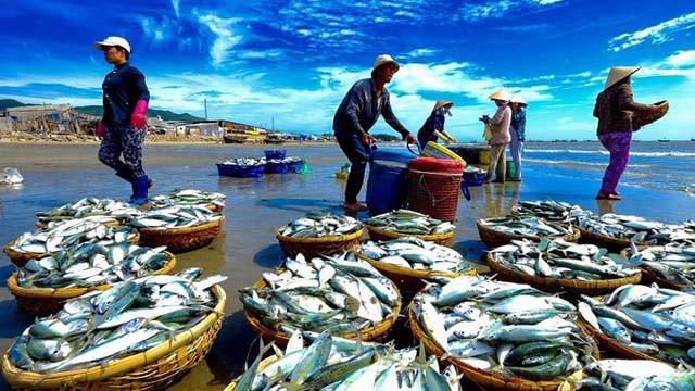 Vượt Mỹ, EU trở thành nơi tiêu thụ thuỷ sản số một của Việt Nam.