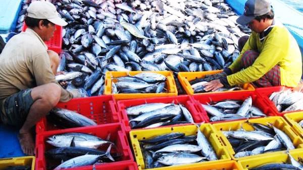 Doanh nghiệp thuỷ sản gặp khó trong việc tiêu thụ hàng hoá trong nước vì quy định không rõ ràng